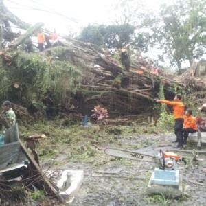 Petugas saat melakukan evakuasi rumah warga yang tertimpa pohon (ctr)