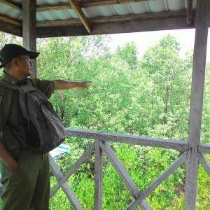 Zaini Tengah Menunjuk Kawasan Penyemaian Bibit Bakau di Kawasan Mangrove Pasar Boom Panjang (RUN)