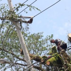 Petugas saat melakukan perbaikan tiang listrik PLN karena pohon tumbang (hfa)
