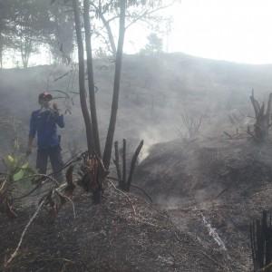 Petugas Pemadam Kebakaran Tengah Berupaya Memadamkan Api Yang Membakar Hutan Kota (ctr)