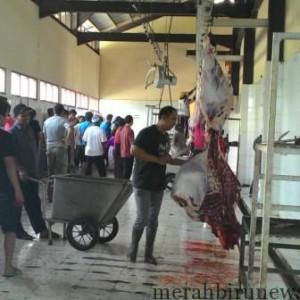 Suasana Pemotongan Hewan Kurban di RPH Hake Babu (run)