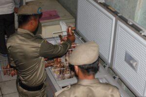 400 Kilogram Ayam Busuk Ditemukan Satpol PP Bersama Tim Gabungan Saat Razia Daging Kerbau Merek Alana di Pasar Gusher Tarakan (IL)