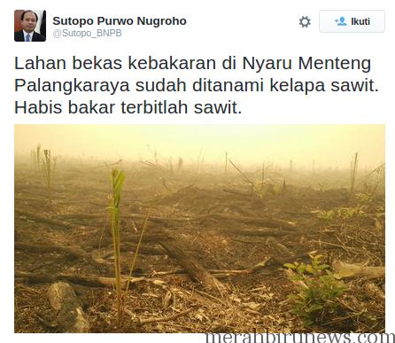 Temuan @Sutopo_BNPB Bekas Lahan Kebakaran Mulai Ditanami Pohon Sawit