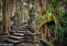 Wisata Monkey Forest Bali
